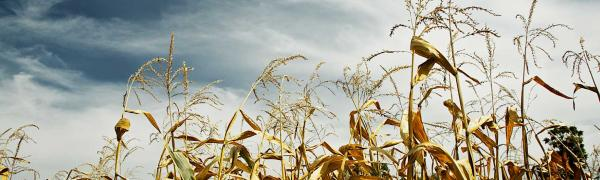 Climate Change and Food Scarcity - Future of Food P1