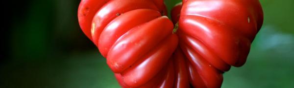 GMOs vs Superfoods - Future of Food P3