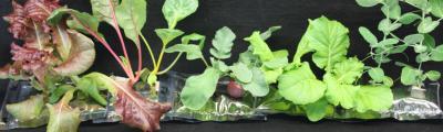 Plants Grown in Space